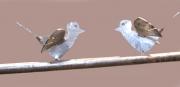 Fenstergitter mit 2 Vögeln