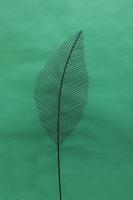 Feingeädertes Blatt aus Rundeisen für den Garten