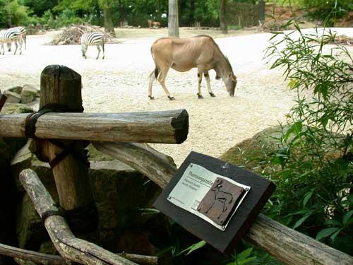 Zoo Hannover - Beschilderung für die Tiergehege