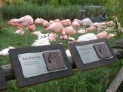 Beschilderung für die Tiergehege im Erlebnis Zoo Hannover