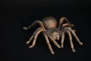 Es gibt wieder neue, aus Bronze gegossene Vogelspinnen