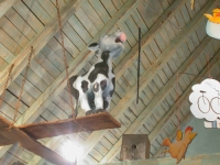 Ein Kälbchen thront in der Mullewappwelt