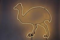 Emu - Leuchttier für das Outback im Winter-Zoo 2011