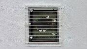 Vogelgitter feuerverzinkt und weiß lackiert