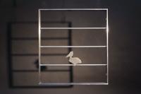 Kleines Fenstergitter mit einem gelaserten Pelikan