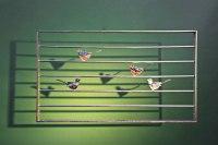 Fenstergitter mit feuerverzinkten Vögeln