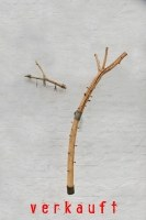 Wandhängende Astgarderobe und ein Schlüsselhalter