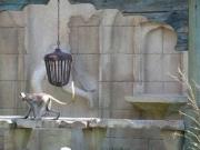 Leuchter für die Hulman Affen im Zoo Hannover