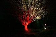 Beleuchtungsplanung für Parks und Gärten
