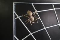 Spinnengitter mit einer massiven Spinne aus Bronze