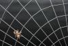 Die Spinne ist fensterseitig bei diesem Spinnennetz Gitter montiert
