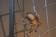Und schon wieder eines unserer schönen Spinnengitter