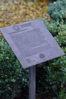 Schild für den tausendjährigen Rosenstock im Hildesheimer Dom