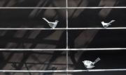 Da bin ich mir sicher: Vogelgitter aus Stahl geschweißt und feuerverzinkt