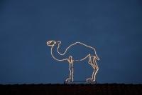 Kamel auf den Dächern in Meyers Hof im Zoo Hannover