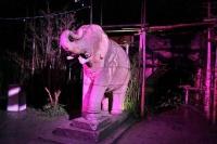 farbige Anstrahlung des Elefanten im Dschungelpalast