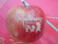Gelaserte Äpfel für  Mullewapp im Zoo Hannover
