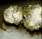 Messingschalen - Messing mit Eisenstäben