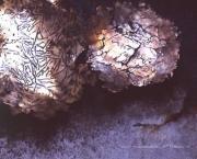 Schalen aus Stahl, Tombak und Messing