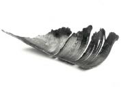 Schale Eisen Blatt