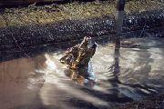 Äußerst scheues Metallungeheuer gesichtet - zum ersten Mal sensationelle Aufnahmen