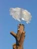 Edelstahl Schäfchenwolke befestigt an einem Baum